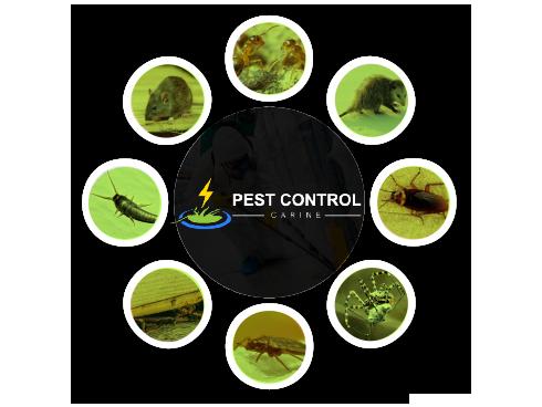 Pest Control Carine